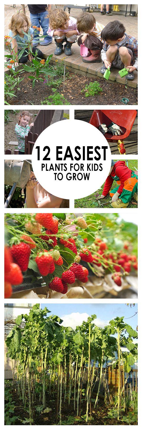 12 Easiest Plants for Kids to Grow | Gardening hacks