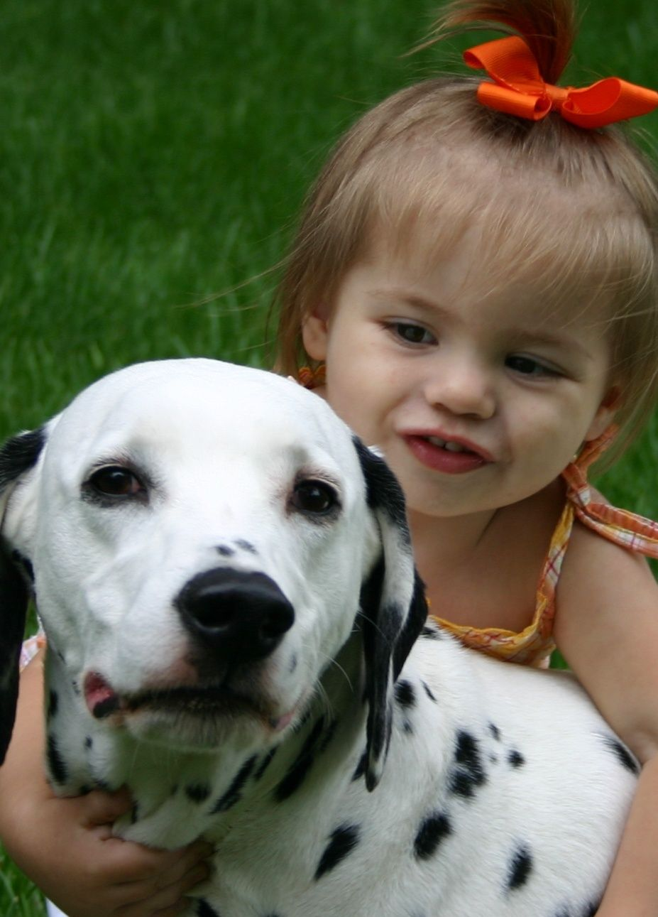 My dalmatian drake was a registered therapy dog and he