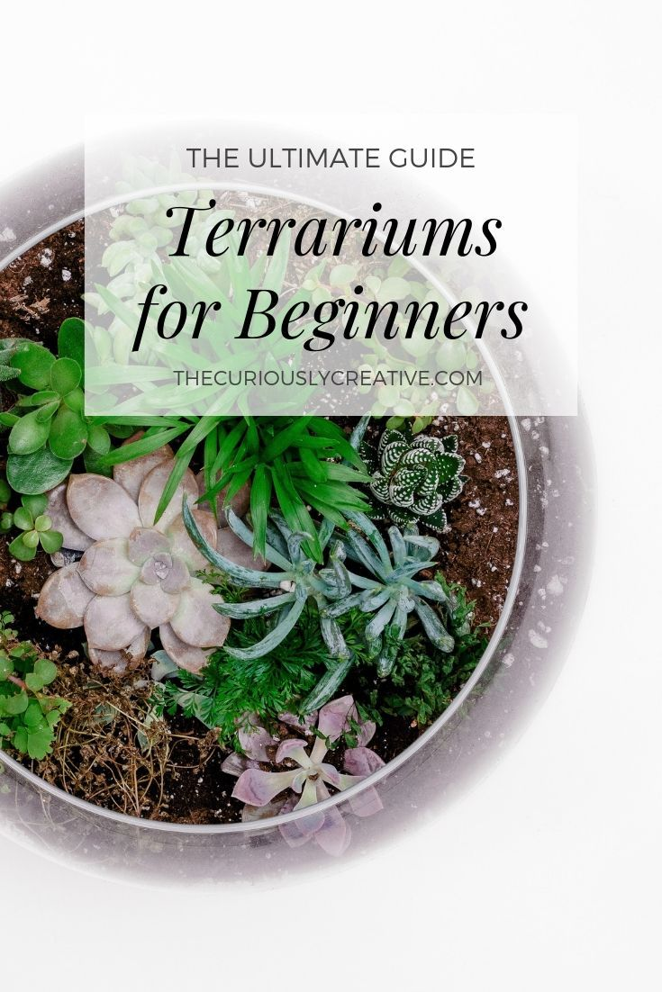 Photo of The Ultimate Guide to Making a Terrarium for Beginners – The Curiously Creative