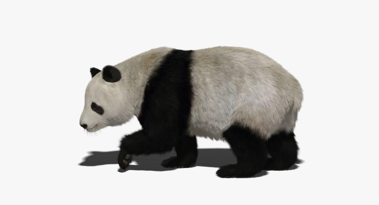 3D giant panda fur rigged