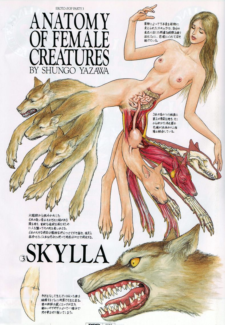 Anatomy Of Female Creatures By Shungo Yazawa I Eat Books For Meals