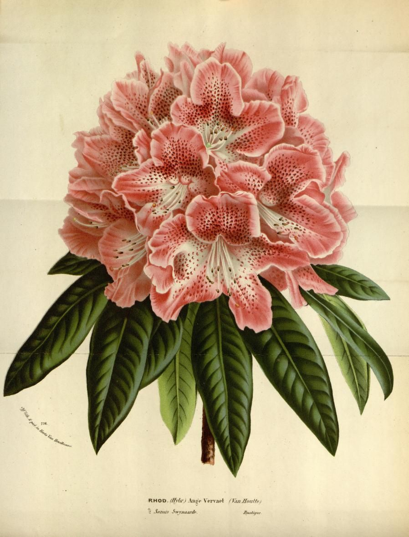 Garden wall art flowers  v   Flore des serres et des jardins de luEurope