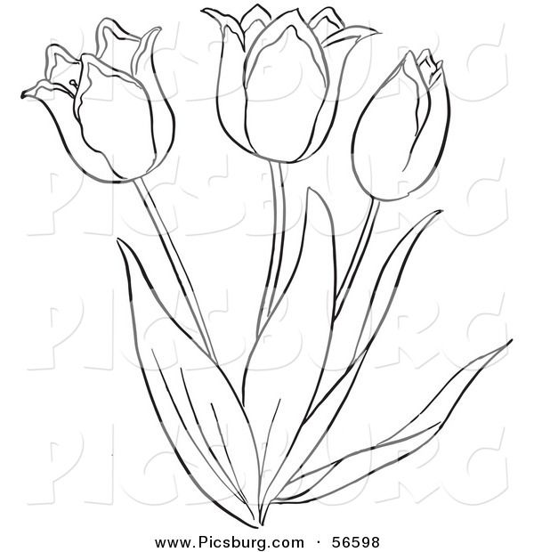 Tulipanes Para Imprimir Buscar Con Google Tulipanes Imprimir Sobres Pinturas