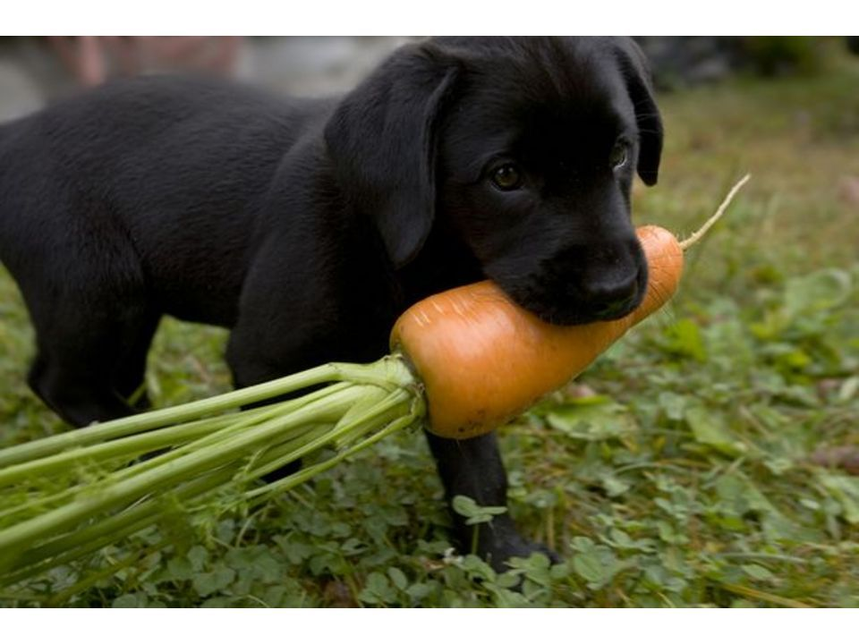 fruits dogs can eat dry fruits