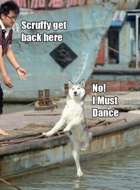 Photo of 21 Really Funny Dance Memes You'll Surely Have A Good Time Seeing | SayingImages.com