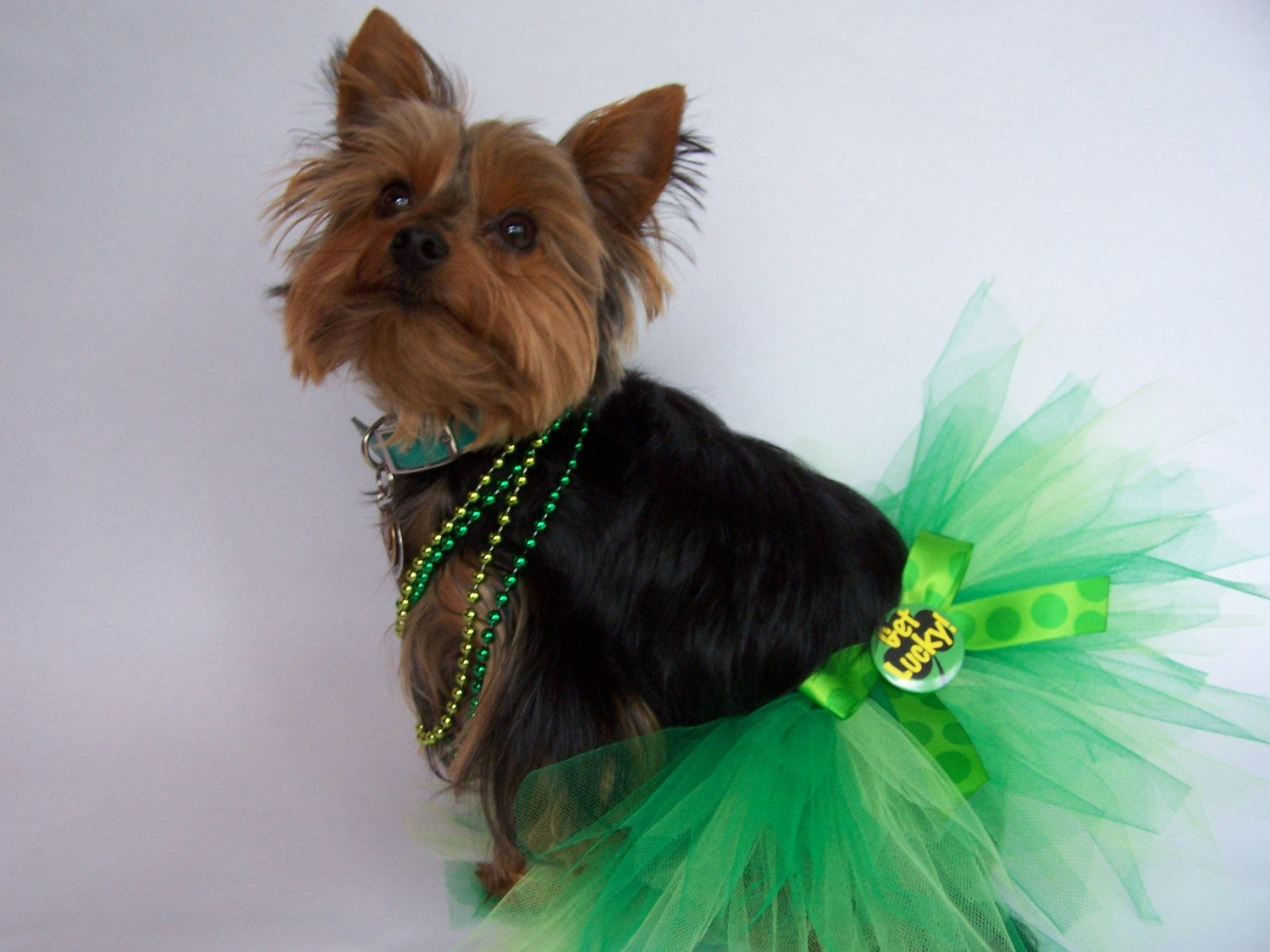 St Patricks day Dog Tutu in You choose size Med or by Frillypaws