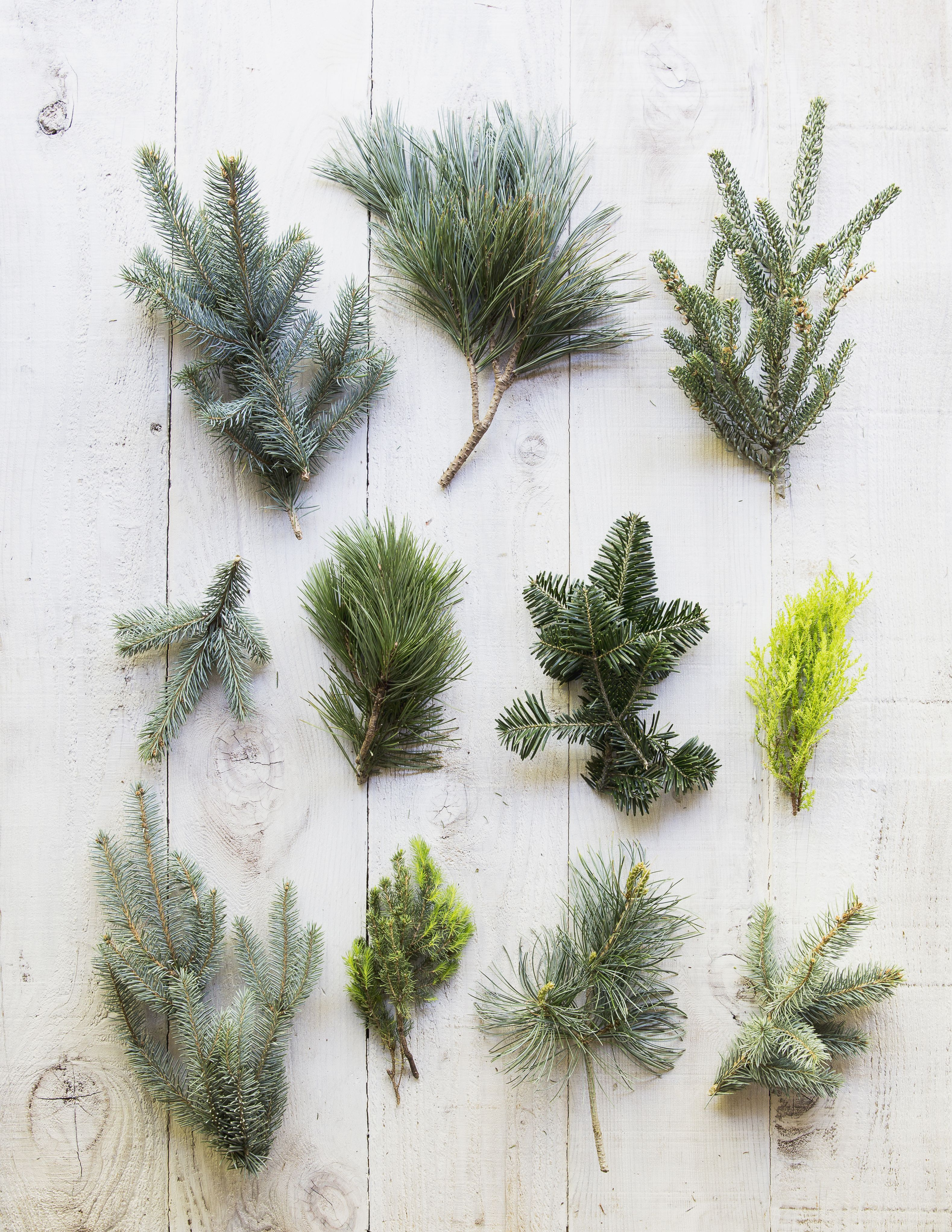 Your Guide to Buying Fir Christmas Trees for the Holidays ...