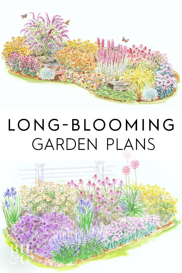 Photo of Long-Blooming Garden Plans