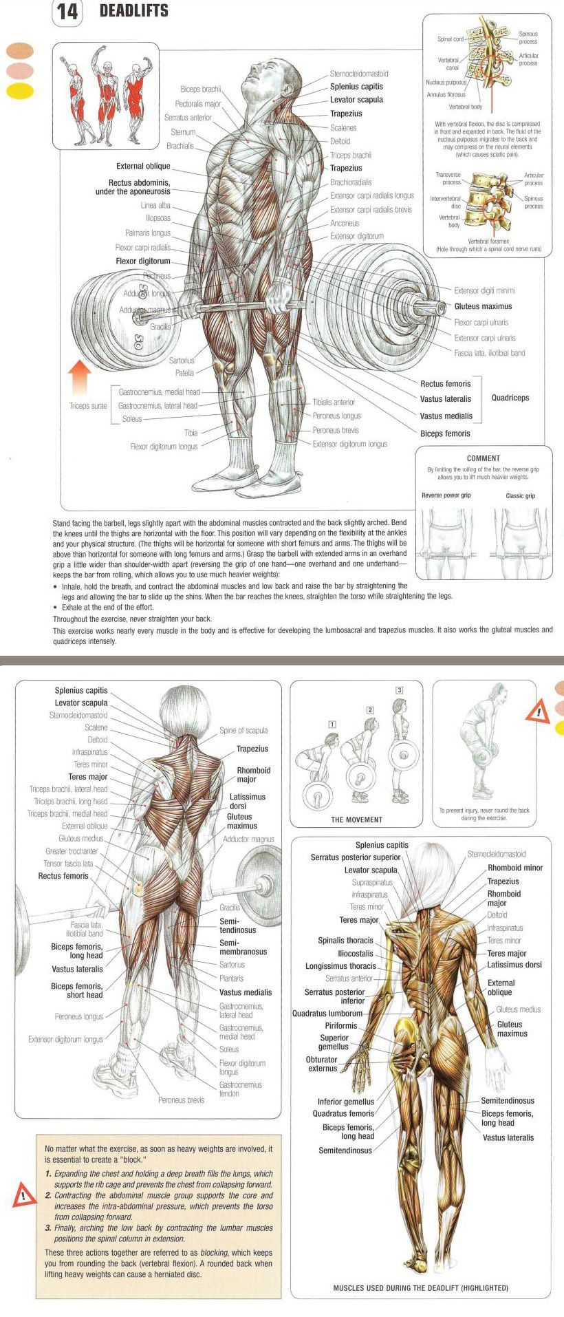 The DEADLIFT Exercise Anatomy. Why this compound exercise when ...