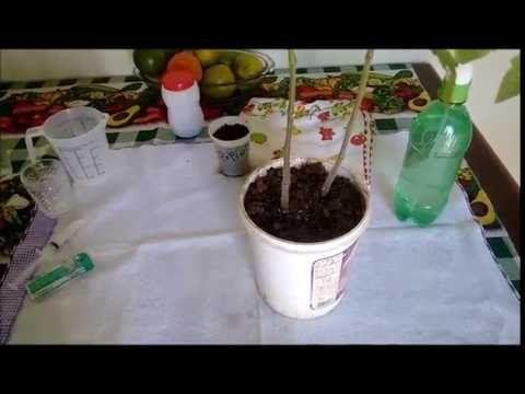 Usando a aspirina no combate de Fungos nas Suas Plantas.