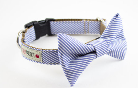 Amazing Dog Collar Bow Adorable Dog - 6b057d6244d029bb50594cdeacb37154  Picture_234686  .jpg