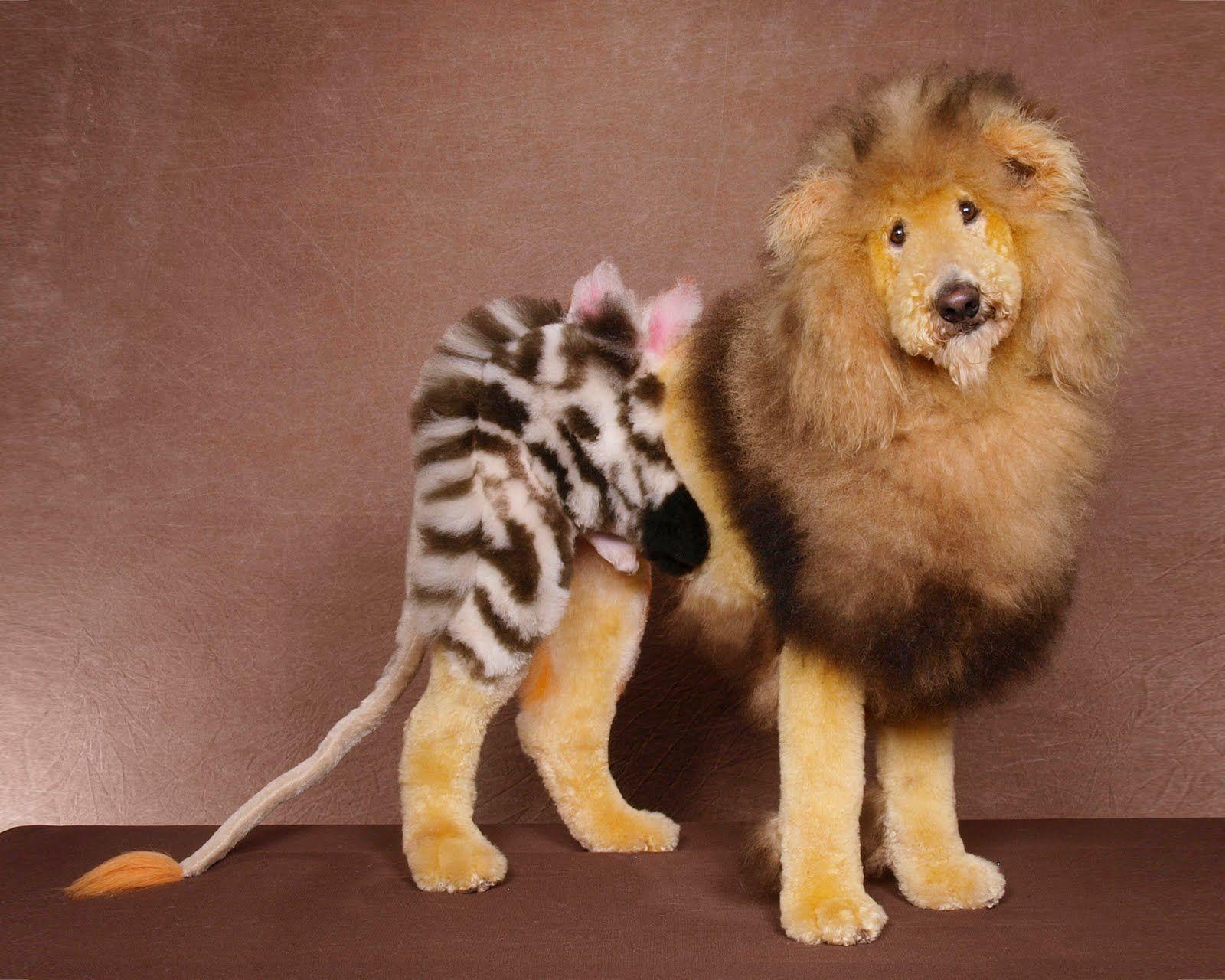 Hahaha Extreme Pets Dog Show Dog Dye
