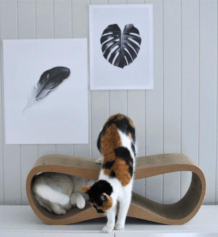griffoir chat design