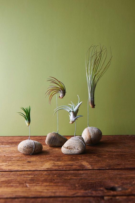 23 Exceptionally Beautiful Air Plant