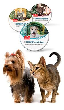 Entirelypets Online Pet Supplies Small Dogs Dogs Fleas