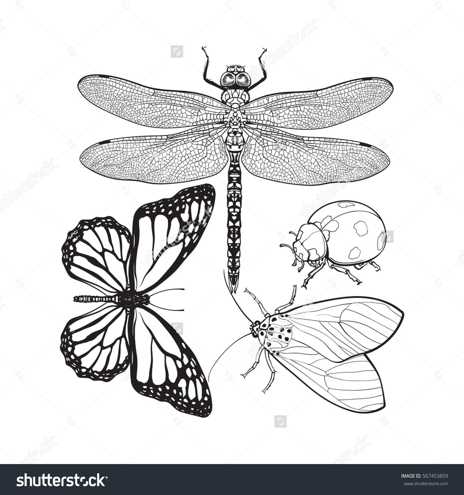 Set of insects like dragonfly, butterfly, ladybird and moth, sketch ...