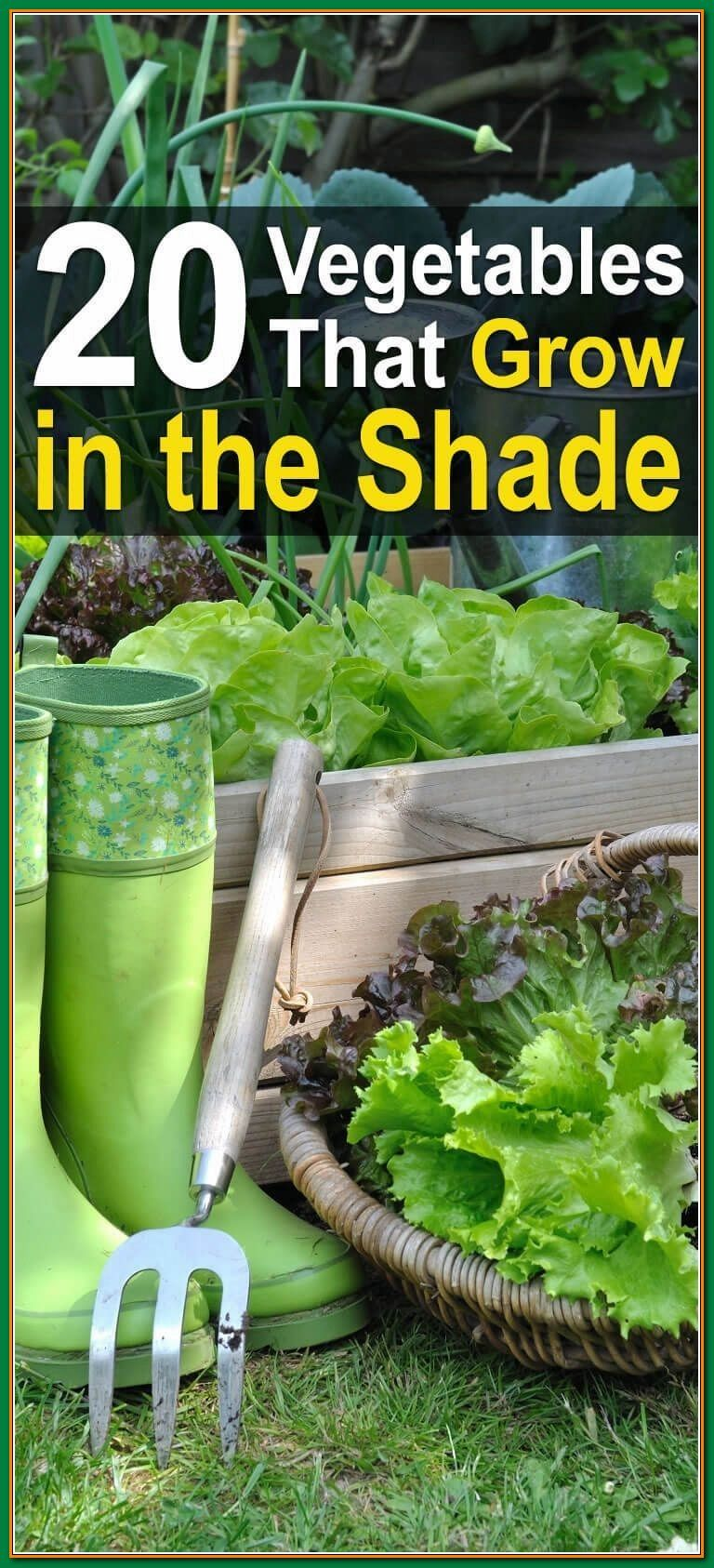 Looking For Organic Vegetables Garden Advice Use These Tips