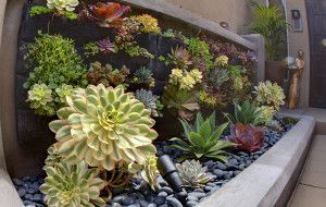 A striking vertical arrangement of plant varieties on this succulent living wall brings life to the entryway of a La Jolla home without taking up much ground space