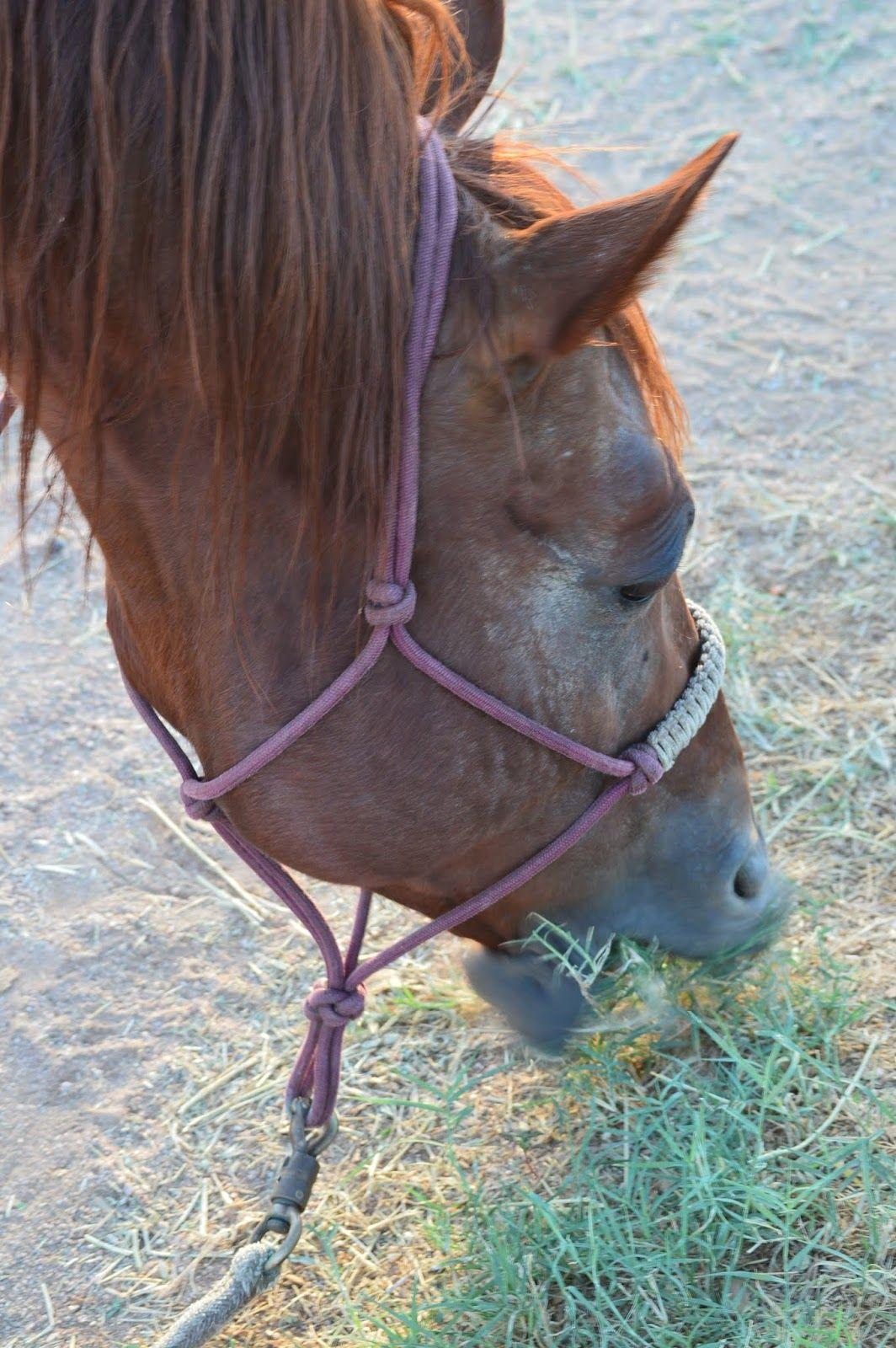 Annabanana Porkchop Animals, Horses, Pork chops