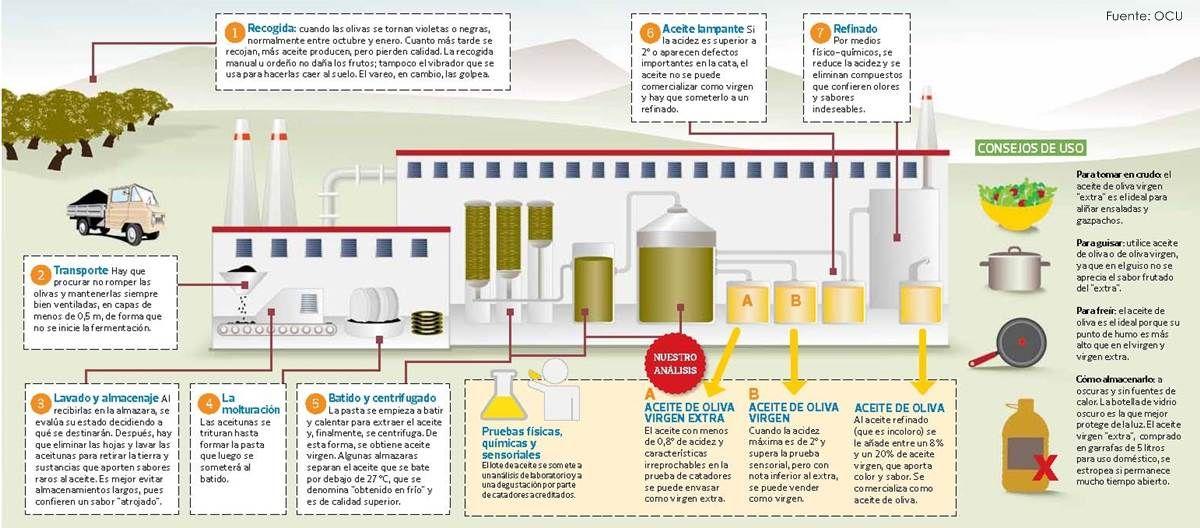 El Proceso De Elaboracion Del Aceite De Oliva Aceite De Oliva