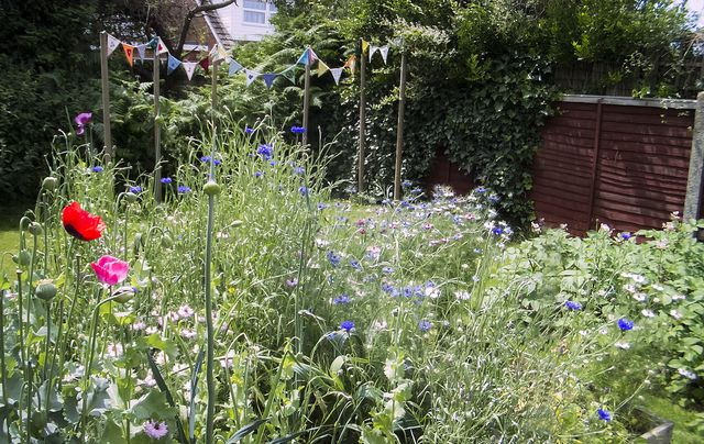 Bee-friendly wild flowers amongst veg patch - bees love it- so, so do I :-)