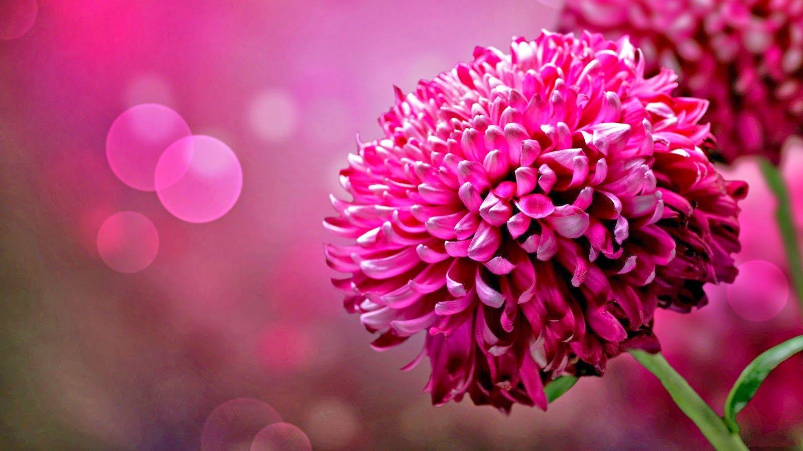 3d Flower Purple
