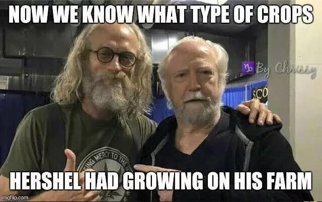 Funny Beard Meme Pics : The walking dead z nation funny meme the walking dead