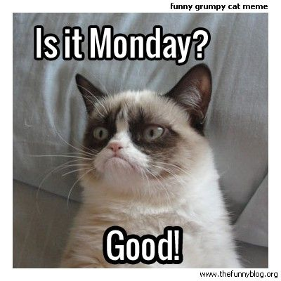 6b09dd2378311c83884a0f1c22561d49 funny monday meme, grumpy cat \u003c3 for the animals! pinterest