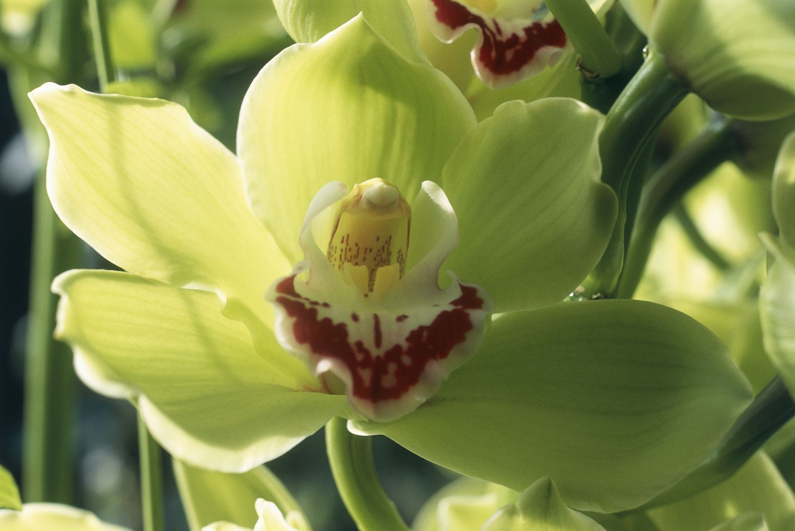 Orchids are used in traditional Asian medicine, perfumes, and spices.