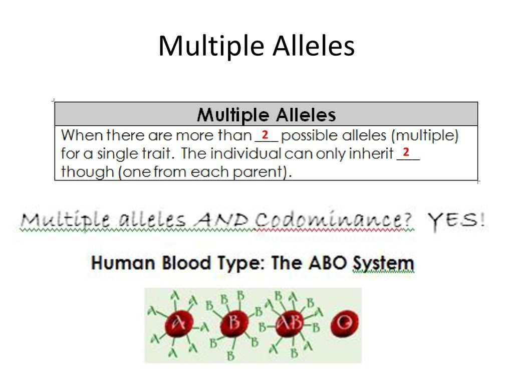 Multiple Allele Worksheet Answers - worksheet