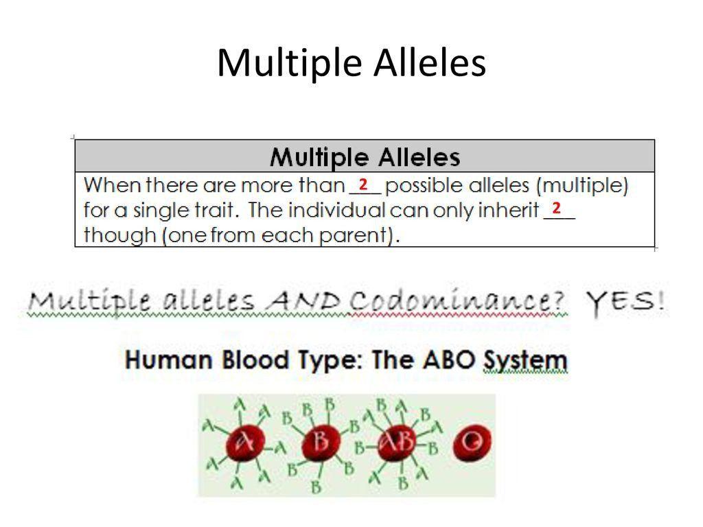 Multiple Allele Worksheet Answers