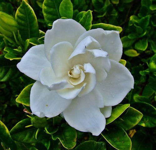 Make Tropical Bath Oil Beautiful Flowers Flowers Plants