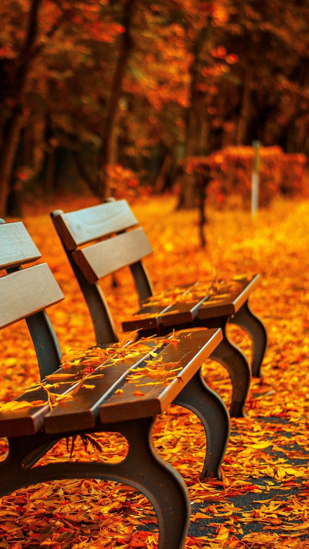 foto de 15 Fall iPhone XS Wallpapers - Best Autumn Backgrounds   Landscape ...