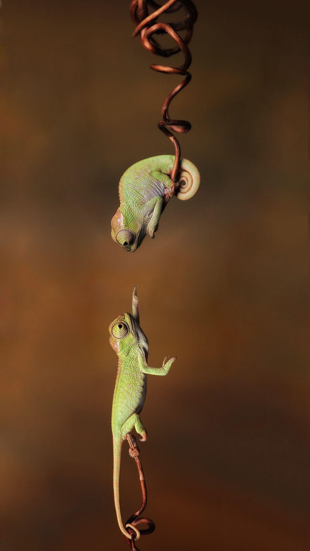 Cute Chameleon Iphone Wallpaper Iphone Wallpaper Best