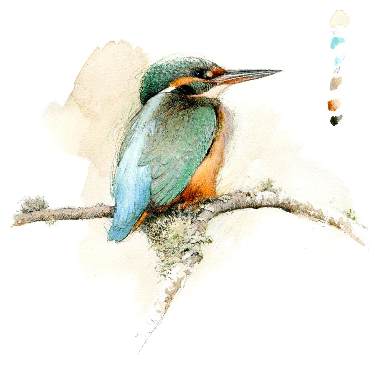 Epingle Par Antonio Carlos Sur Aquarela Oiseau D Aquarelle