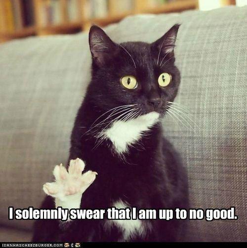 Marauder's Meow
