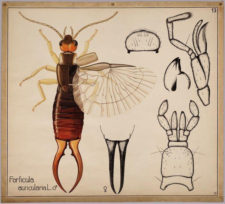 Insectos / Dibujos de la colección de la universidad de Wageningen ...