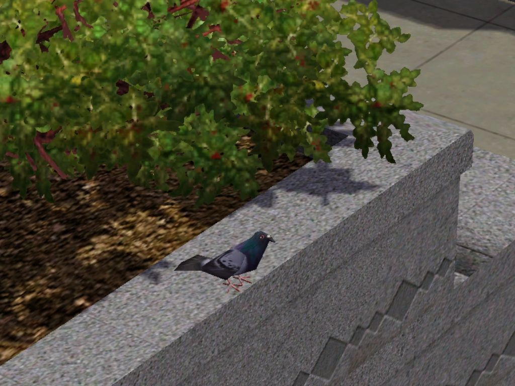 Who knew Sims 3 had pigeons in Bridgeport?! This is great