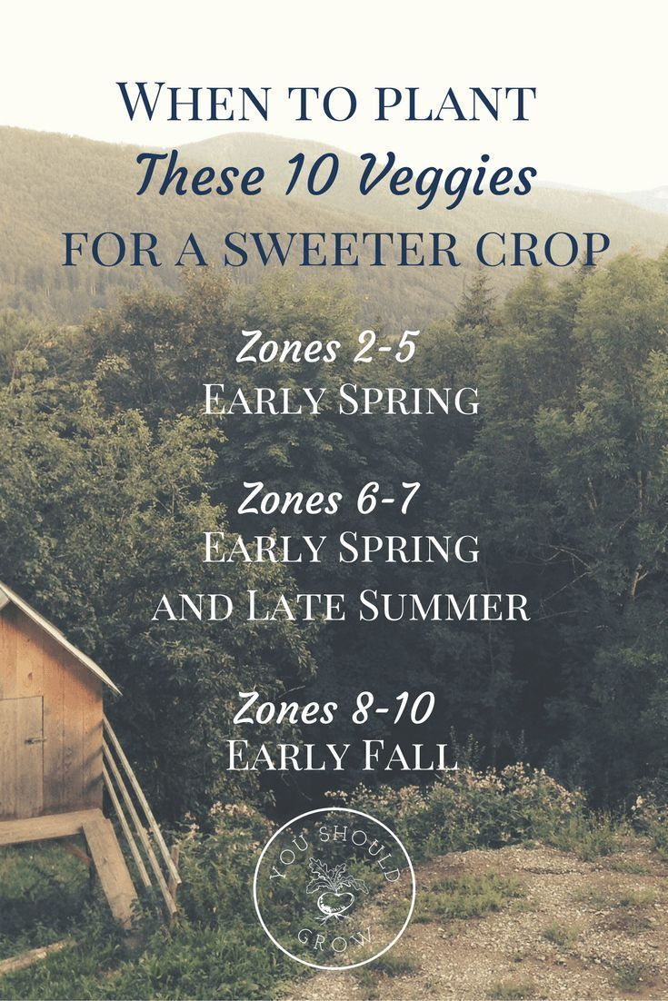 10 Frost Tolerant Vegetables To Grow In Fall Backyard 400 x 300