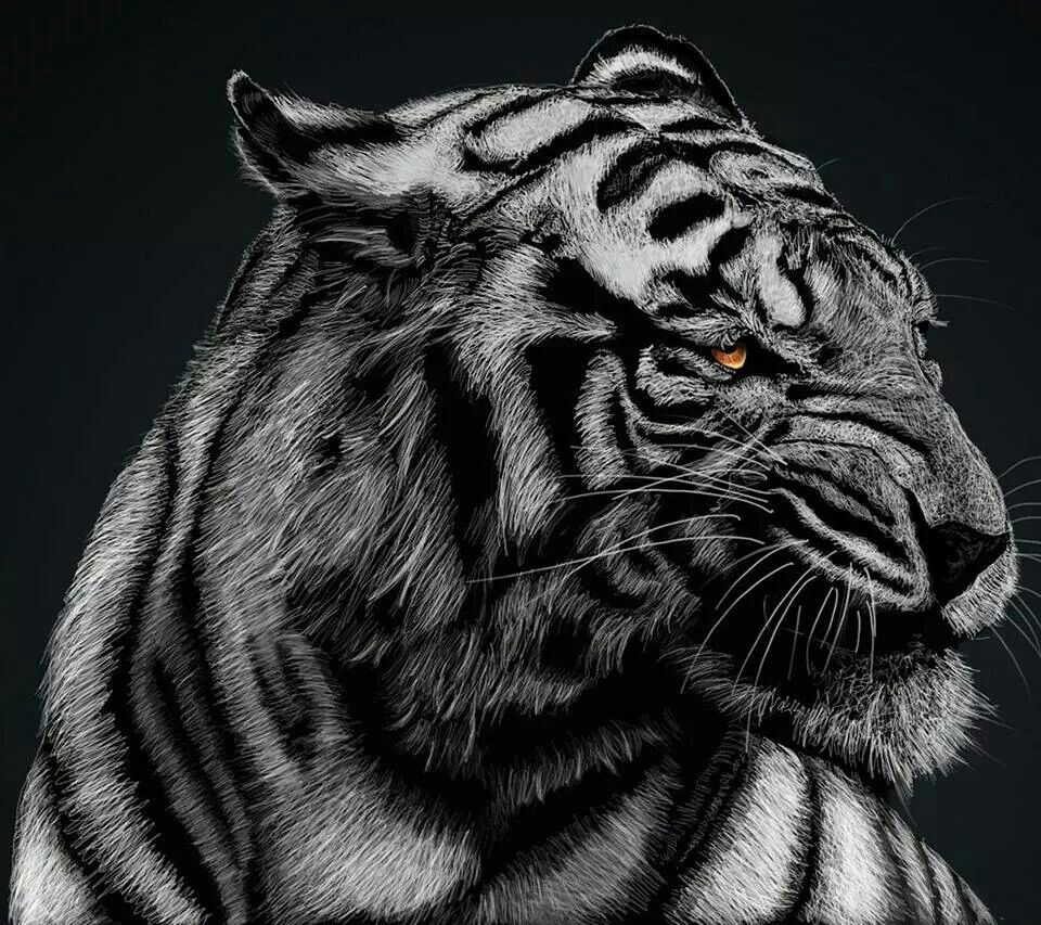 Pin By June Mueller On Jungle Animals Tiger Pictures Animal