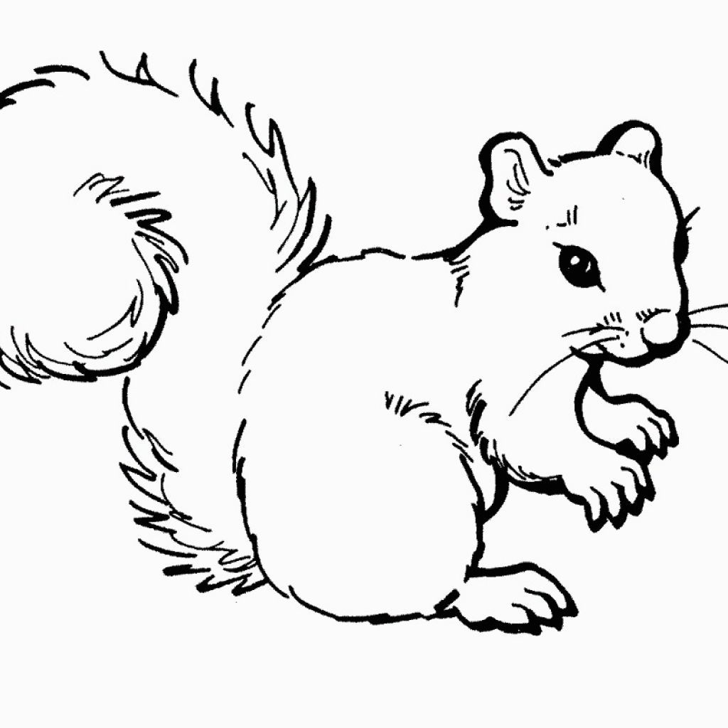 squirrel coloring pages for kids Google Search