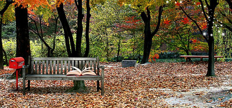 Deciduous Forest Park Bench Book Fresh Poster Banner Cool Pictures For Wallpaper Park Bench Picsart Background