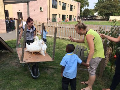 This week Team W.E  were the first class to try our new duck mobile.  A converted wheelbarrow off cuts of wood, chicken wire and haypresto a duck mobile.  We can now safely move the ducks from their rooftop home, down in the lift to forage in the schools veggie garden.