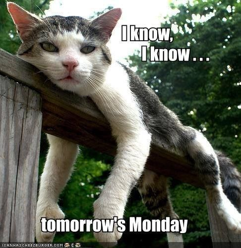 Tomorrow Is Monday Funny Cat Pictures Cats Funny Cats