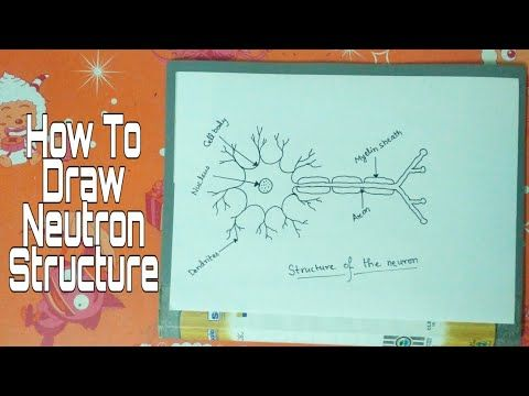 How to draw #neuron in easy steps for Beginners_10 Biology ...