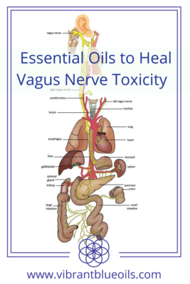 how to stimulate vagus nerve manually