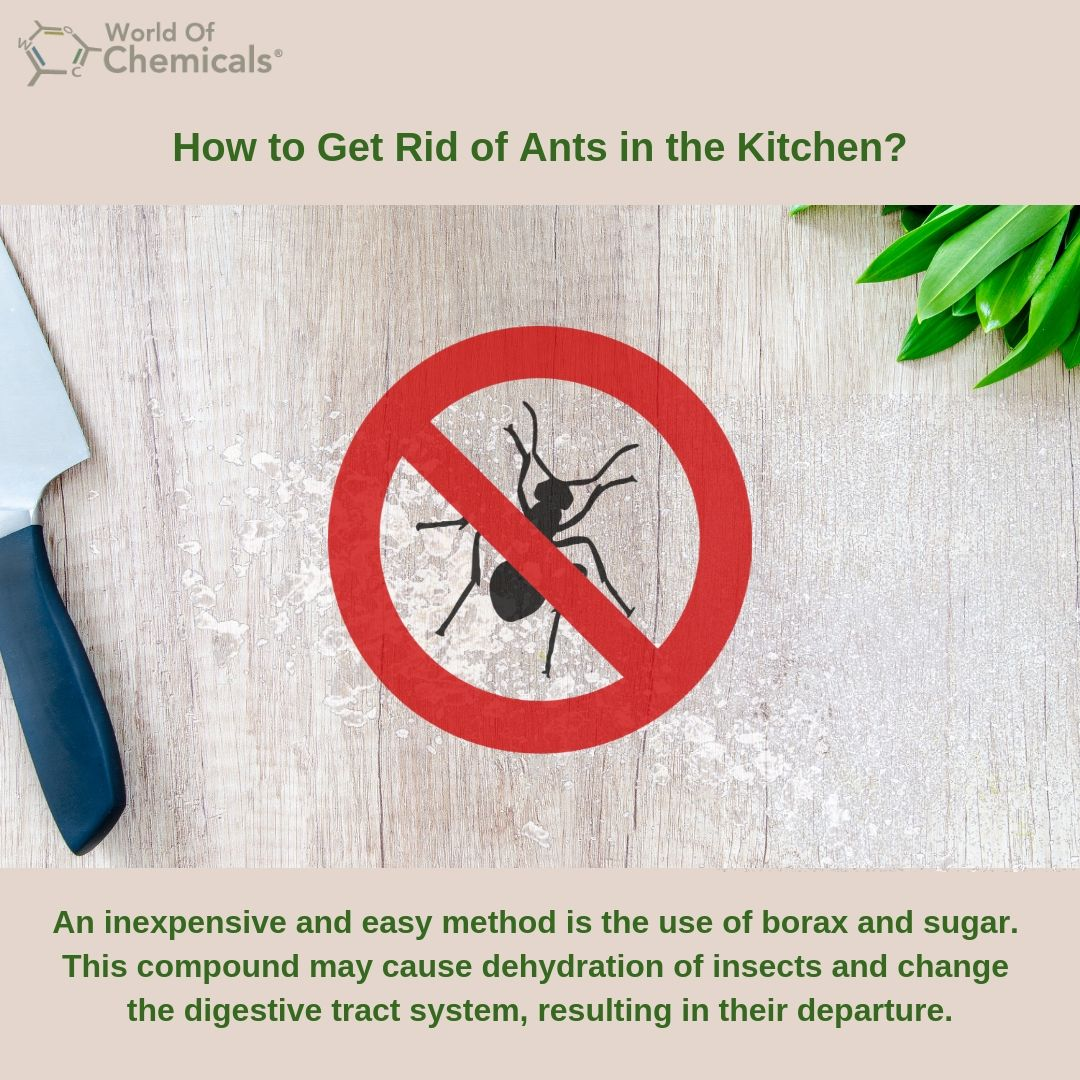 How to Get Rid of Ants in the Kitchen with Borax? Rid of
