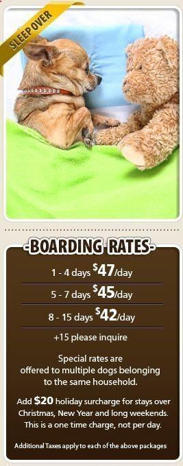 Pet Training Dog Boarding Etobicoke Toronto Based Dog Daycare