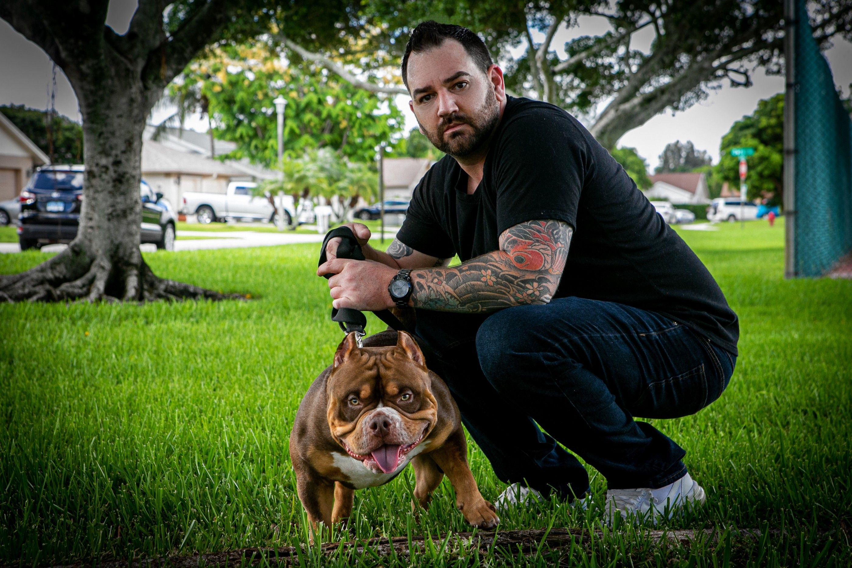 The Extreme Pocket Bully Puppies Of Venomline American Bully Breeders In 2020 American Bully Bully Breeds Pocket Bully