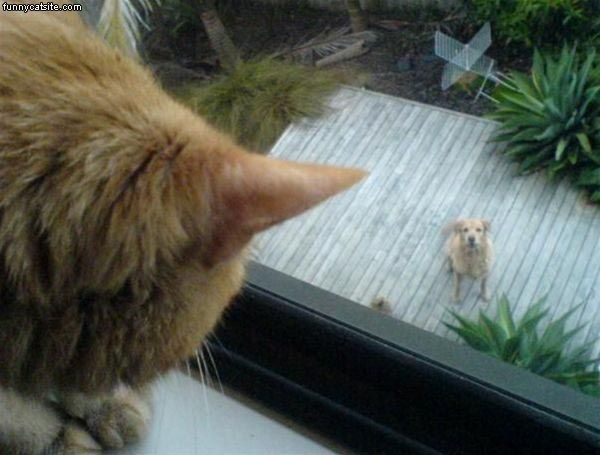 Not Today Dog - Daily Funny Cat Pictures from funnycatsite.com